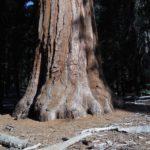 Yosemite - sekvoj