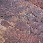 Zkamenělá písečná pláž